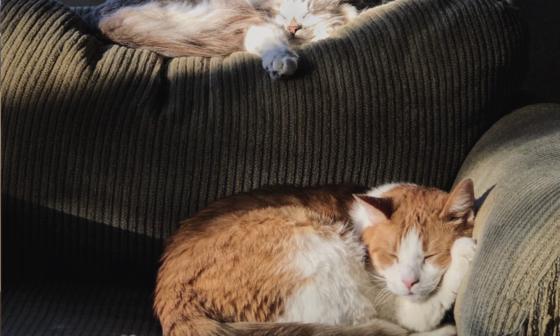 Cats Sofa Airbnb